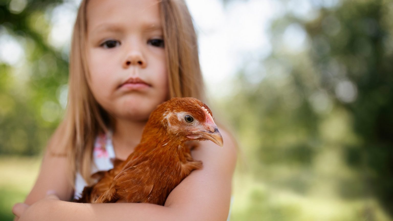Little girl with her little red hen.